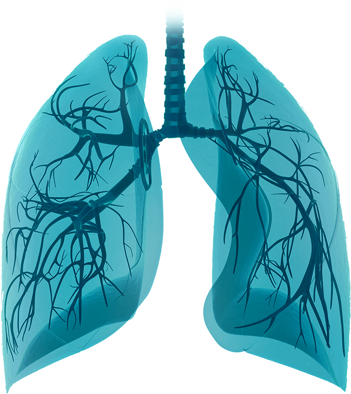 Insights in Interstitial Lung Disease